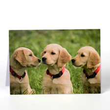 Personalized Pet Greeting Cards