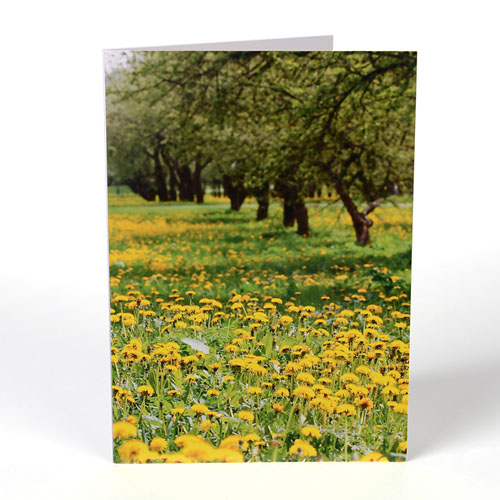 Personalized Portrait Photography Greeting Cards
