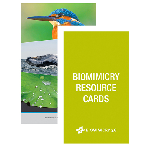 Biomimicry Resource Cards